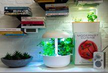 Indoor Urban Gardening