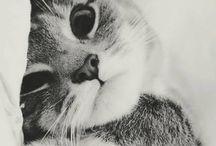 koťàtka