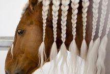 fonások lovaknak