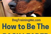 puppy training Finn