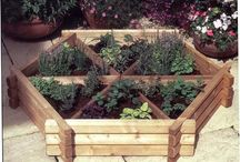 Garden/Raised Beds or Trellis / by Kim Boyette
