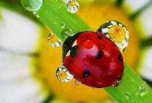 Ladybug Love / For My Sweet Mother, A Lifelong Lover Of Ladybugs. ♡ / by Psychic Kimberly Willis