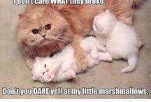 Quotes / Some cute some sad some funny