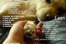 Veterinary Medicaine <3 / by Samii Willet