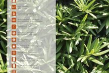 Assortment EVERGREEN QuickHedge instant hedges / At QuickHedge, you can choose from no fewer than twenty species of beautiful, lush greenery to enclose your property or add a privacy-enhancing decorative element. Evergreen or deciduous, red or golden autumn foliage, flowering or fruit-bearing: whatever your fancy, Quick-Hedge has the hedging plant for you. Our instant hedges are grown and nurtured in the best soil imaginable by dedicated professionals in Boekel, The Netherlands.   Evergreen, groenblijvend, immergrün, persistante