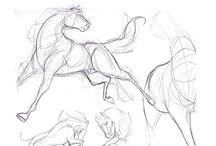 Animals-Anatomy-sketches