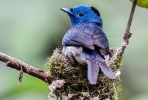 Birds / A collection of the most beautiful birds on pinterest!
