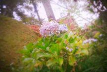 Flores por mim
