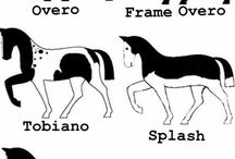 Paarden vacht