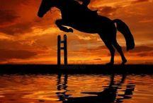 Milujeme koně a parkur