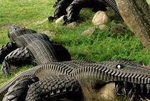 Tire Crafts / by Aaron Plunkett