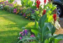 road side plants
