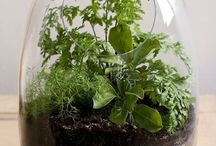 Planty Stuff