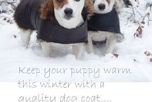 Best Winter Coats Dogs / Dogs need winter coats too! Especially if your dog has short hair and lives in a cold climate