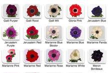 Flora Variety