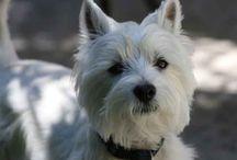 My new dog / by Mason & Madison