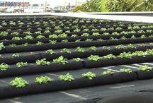 roof top gardening  & Greenhouses (general)