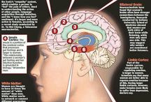 Brain Information / All information about the brain and how aspects impact on our well-being.