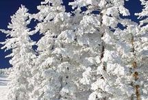 La magia della neve.....