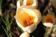 Floral Wonders / by John Michael