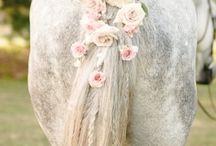 Horses and poneies