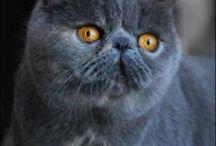exotic katten