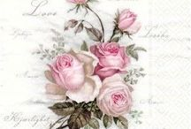 růže růžové