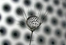FlowerZ / by Q-Sphere Team