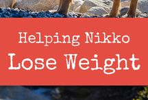 Dog Fitness / Tips and tricks to help your dog stay at a healthy weight! Includes posts about how to help your dog increase strength and overall fitness!