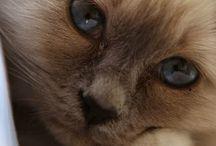 kediler 3