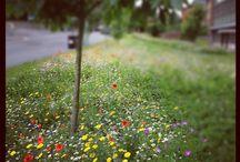 Create an Urban Meadow