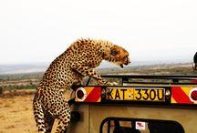 On Safari with Fly in Safari Company