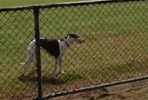 Funny doggos