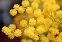 *yellow*