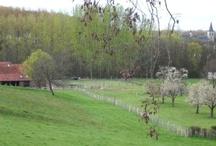 Landgoed Wolfhagen