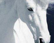 ATLAR/HORSES
