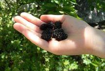 arboles frutales crecimiento rapido