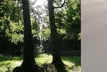 Vi planter et træ / Træd varsomt på denne jord - også når du går herfra… Hos Tommerup Kister arbejder vi aktivt på at skåne miljøet.   Derfor har vi nu valgt at tage endnu et skridt i den miljørigtige retning: Vi planter et træ for hver kiste vi bringer.  Vi planter et træ for hver kiste vi bringer Tommerup Kister planter blandede løvtræer og frugttræer til gavn for klima, natur, dyr og mennesker sammen med Growing Trees Network.