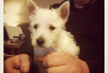 My Puppy ♡