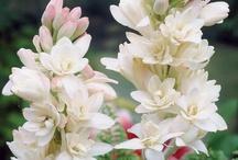 Mars - Des fleurs, une saison