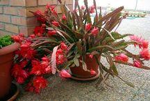 Todo Sobre Jardineria / Aquí encontrarás todo lo relacionado a la jardinería, tips, fichas de plantas y flores, cactus, bonsai y muchas cosas mas  http://conocesobre.com/todosobrejardineria
