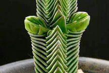 Desert Garden / Stuff that will work in the desert, duh  ;)