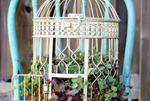 bird cage planting