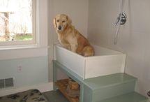 Boulder Dog Wash