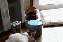 Cats and Veggies