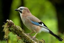 Bird Sanctuaries in West Bengal / Sanctuariesindia: Here you can get information about all Bird Sanctuaries, National Parks, Forests in West Bengal, India.