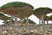 tree/ puu