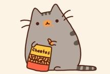 Kitti cat
