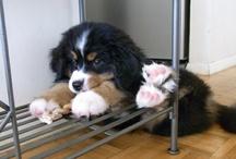 Animals..I want!