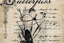 butterfly bướm